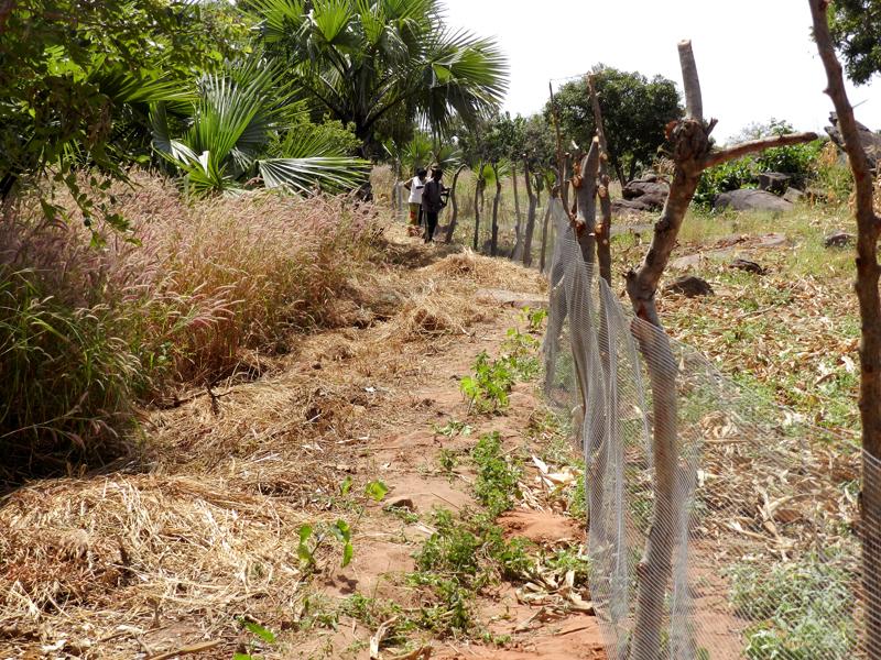 Jardin caummunautaire, cloture à Boré, village près de Nagou, Togo