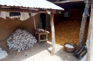 Une case, récolte du coton et du maïs, village de Nagou, Togo.